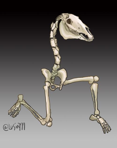 ケンタウロスの骨格.jpg