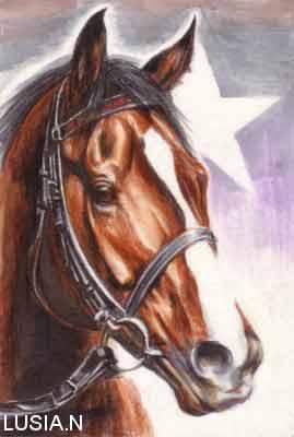 馬の絵サンライズマックス